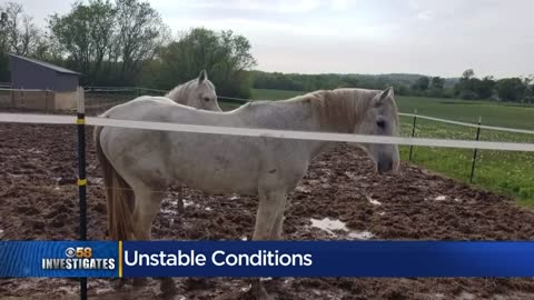 Horse boarding facility shut down in Racine County